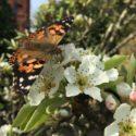 Butterflies released in Birkdale